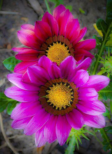 flower84
